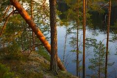 Заход солнца в национальном парке стоковое фото rf