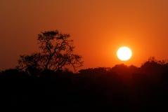 Заход солнца в национальном парке Chobe, Ботсвана Стоковые Фото