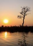 Заход солнца в национальном парке Chobe, Ботсване, Африке Стоковое фото RF