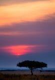 Заход солнца в национальном парке Maasai Mara вышесказанного Кения стоковые фото