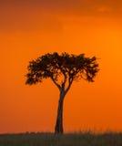 Заход солнца в национальном парке Maasai Mara вышесказанного Кения стоковые изображения rf