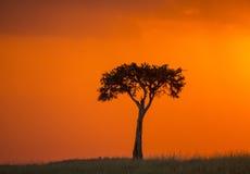 Заход солнца в национальном парке Maasai Mara вышесказанного Кения стоковое фото