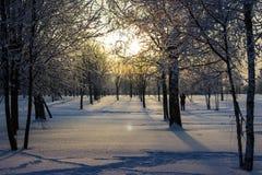 Заход солнца в парке зимы. Стоковые Фотографии RF