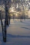 Заход солнца в парке зимы. Стоковая Фотография RF