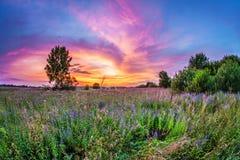 Заход солнца в поле лета Стоковые Изображения RF