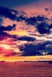 Заход солнца в полях в лете Стоковые Фотографии RF