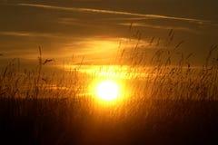 Заход солнца в полях Стоковое Изображение