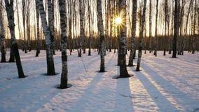 Заход солнца в пуще зимы акции видеоматериалы