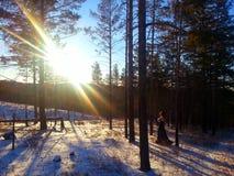 Заход солнца в пуще зимы стоковые фото