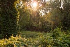 Заход солнца в пуще Стоковые Фотографии RF