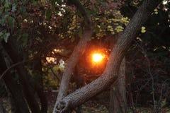 Заход солнца в пуще Стоковое фото RF