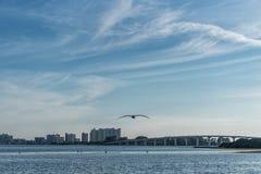 Заход солнца в пляже Clearwater, Флориде Пеликан летания Стоковые Изображения RF