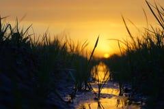 Заход солнца в расстоянии с refection в воде Стоковые Фотографии RF