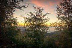 Заход солнца в древесинах Стоковое Изображение RF