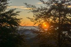 Заход солнца в древесинах стоковое фото rf