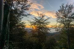 Заход солнца в древесинах стоковые фотографии rf