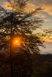 Заход солнца в древесинах Стоковое Фото