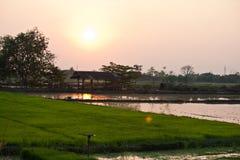 Заход солнца в рисовых полях Стоковая Фотография RF