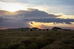 Заход солнца в саванне стоковые фото