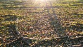 Заход солнца в саде Стоковые Изображения RF