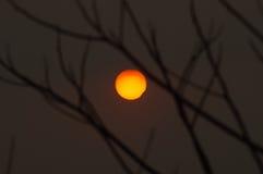 Заход солнца в силуэте дерева Стоковая Фотография RF