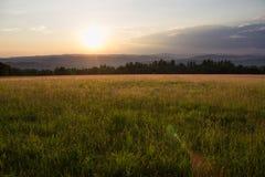 Заход солнца в травянистом луге Стоковые Изображения