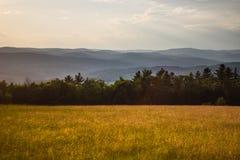 Заход солнца в травянистом луге Стоковые Изображения RF