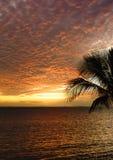 Заход солнца в тропическом Фиджи Стоковые Изображения RF