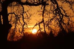 Заход солнца в дубе Стоковая Фотография
