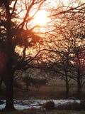 Заход солнца в Хилверсюме, Нидерландах Стоковые Фото