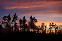 Заход солнца в Швеции 3 Стоковое Изображение RF