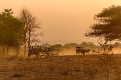 Заход солнца в Bagan с тележкой лошади Стоковая Фотография