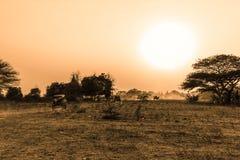 Заход солнца в Bagan с тележкой лошади Стоковые Фото
