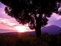 Заход солнца в magenta цвете Стоковое фото RF