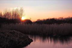 Заход солнца в Nieuw-Vennep Стоковые Изображения RF