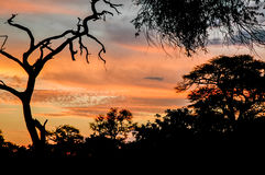 Заход солнца в Okavango стоковое фото