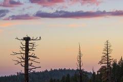 Заход солнца в Sierras Стоковые Фото