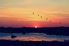 Заход солнца Голуэй с птицами Стоковое Изображение RF