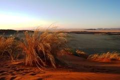 Заход солнца дезертируйте namib стоковые фото