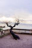 заход солнца дерева на море Стоковая Фотография