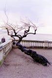 заход солнца дерева на море Стоковые Изображения