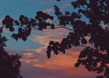 Заход солнца дерева Стоковые Изображения RF