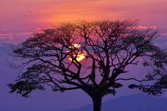 Заход солнца-дерево Стоковое Фото