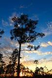 Заход солнца леса болотистых низменностей Стоковые Фото
