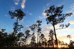 Заход солнца леса болотистых низменностей Стоковые Фотографии RF