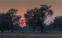 Заход солнца леса Стоковые Фотографии RF