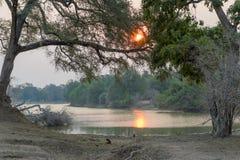 Заход солнца леса Стоковая Фотография