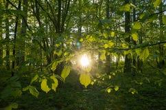 Заход солнца леса Стоковая Фотография RF