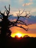 Заход солнца лета в английской сельской местности Стоковые Фотографии RF