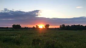 Заход солнца лета в поле акции видеоматериалы
